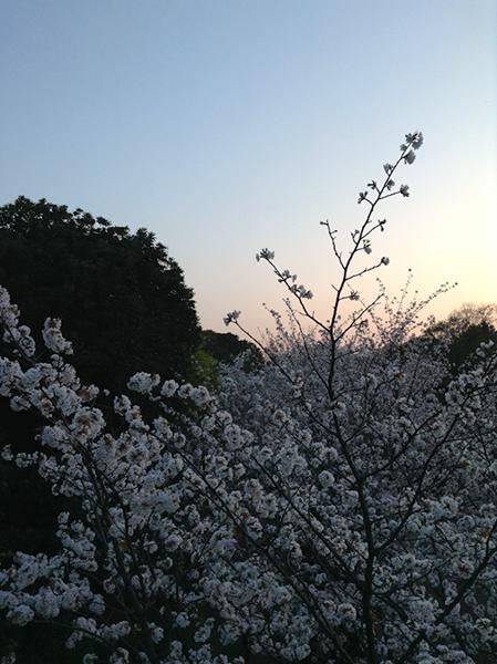 Sweet home Tokyo 91 竹橋_a0003650_22585899.jpg