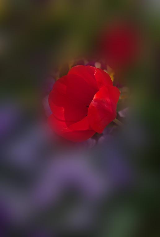 d0237959_2151627.jpg