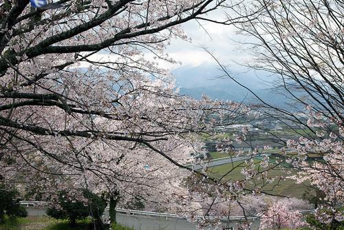 2014年春。阿波の土柱で中野建築のお花見!_a0163962_8225856.jpg