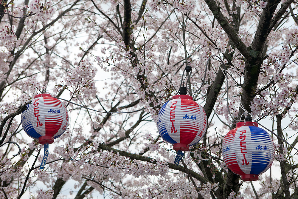 2014年春。阿波の土柱で中野建築のお花見!_a0163962_8225958.jpg