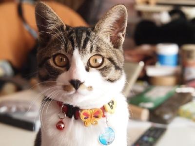 これまた久しぶりの猫&猫…猫_b0001465_17211830.jpg