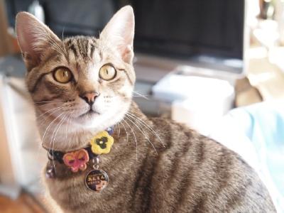 これまた久しぶりの猫&猫…猫_b0001465_17214945.jpg