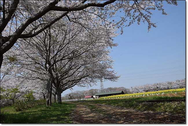 トロッコ列車・・・成田ゆめ牧場_b0053765_20515337.jpg