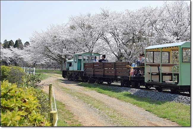 トロッコ列車・・・成田ゆめ牧場_b0053765_20533391.jpg