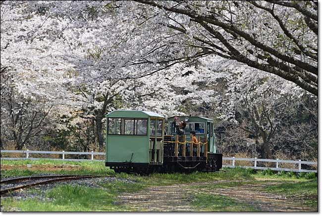 トロッコ列車・・・成田ゆめ牧場_b0053765_2055370.jpg