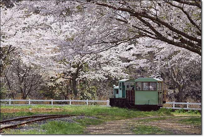 トロッコ列車・・・成田ゆめ牧場_b0053765_2057881.jpg