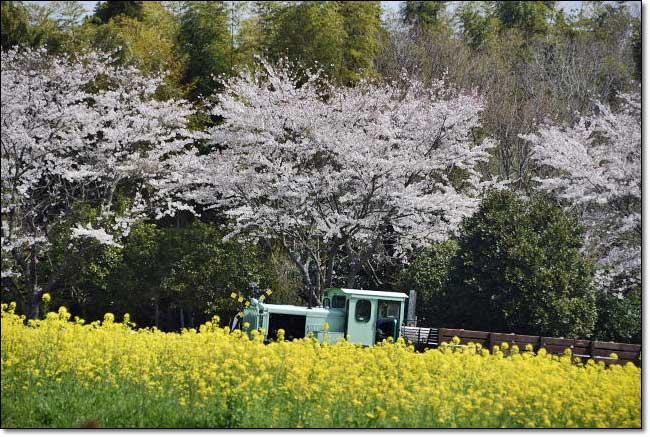 トロッコ列車・・・成田ゆめ牧場_b0053765_21058100.jpg