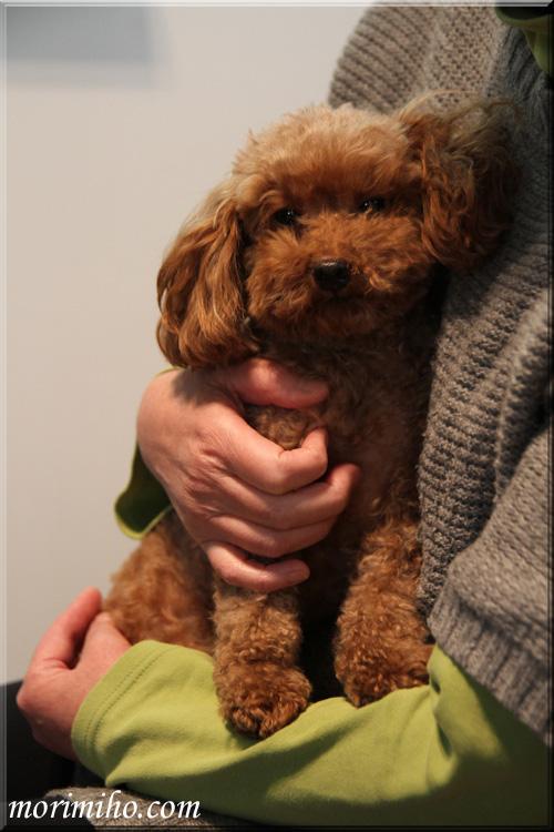 保護犬カフェからの譲渡犬ミミィのこと_b0123371_0434481.jpg
