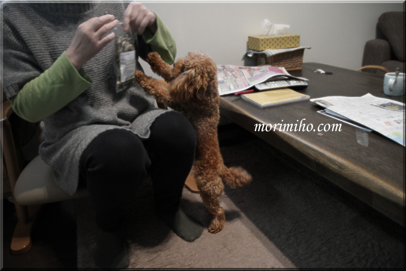 保護犬カフェからの譲渡犬ミミィのこと_b0123371_0502915.jpg