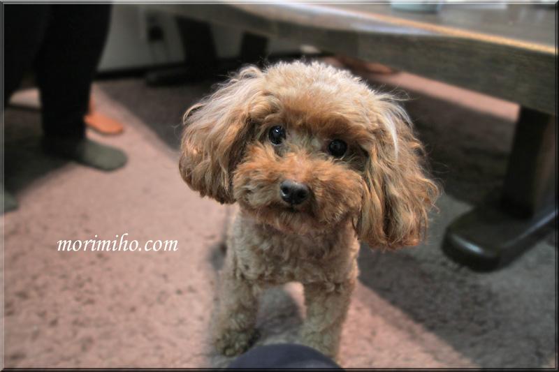 保護犬カフェからの譲渡犬ミミィのこと_b0123371_0531979.jpg