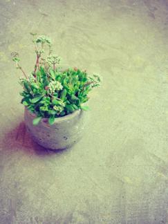 今週の鉢物さん_b0209477_16242115.jpg