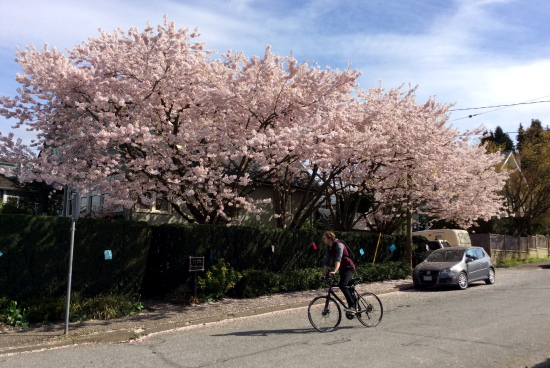桜の風景_d0129786_1501114.jpg