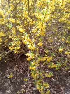 パワーカラー/Golden bell flower_d0090888_191844.jpg