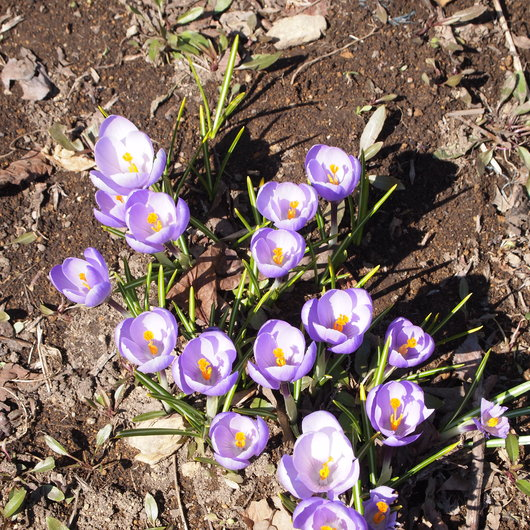 お庭の様子_a0292194_1756375.jpg