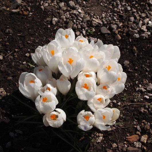 お庭の様子_a0292194_175679.jpg