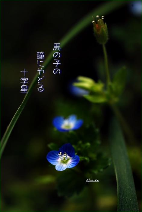 f0053297_46594.jpg
