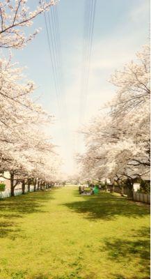 2014年の桜_a0188798_22491225.jpg