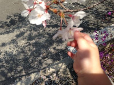 2014年の桜_a0188798_22491392.jpg