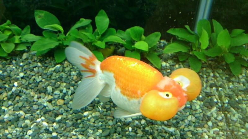 観賞魚フェア(2014)_b0298605_17114493.jpg