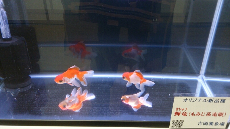 観賞魚フェア(2014)_b0298605_17174965.jpg