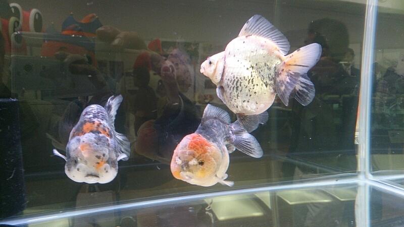 観賞魚フェア(2014)_b0298605_17515656.jpg