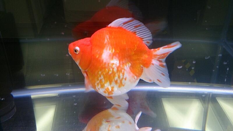 観賞魚フェア(2014)_b0298605_1752421.jpg