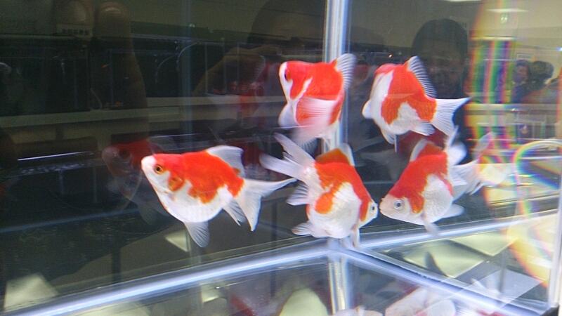 観賞魚フェア(2014)_b0298605_17535750.jpg