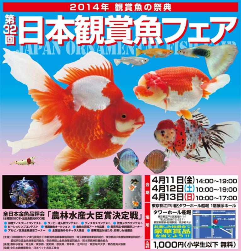 観賞魚フェア(2014)_b0298605_179511.jpg