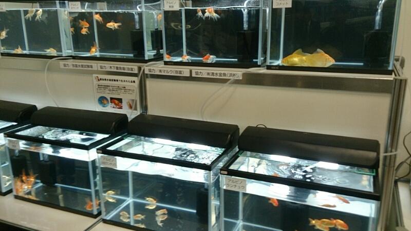 観賞魚フェア(2014)_b0298605_1813030.jpg