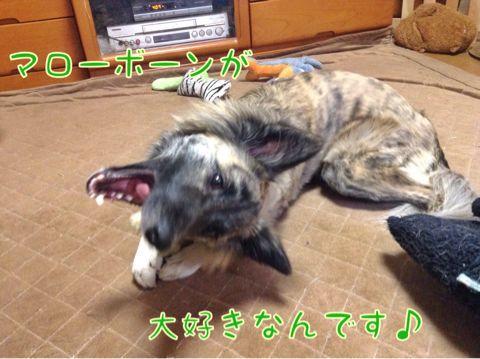 f0329311_18314819.jpg