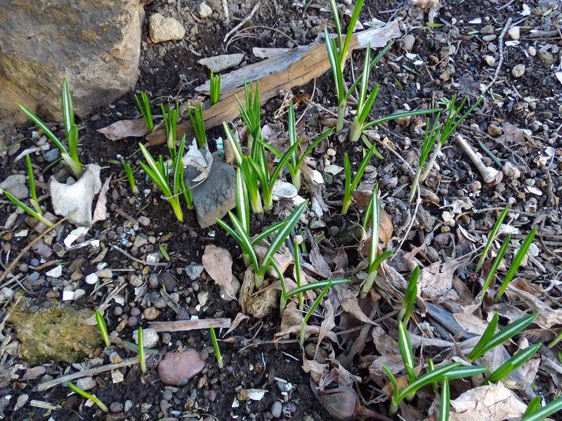 冬から春への庭_c0025115_2133654.jpg