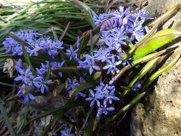 冬から春への庭_c0025115_2134142.jpg