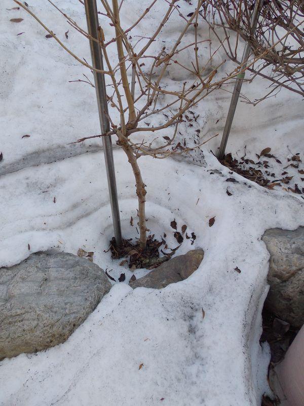 冬から春への庭_c0025115_2137989.jpg