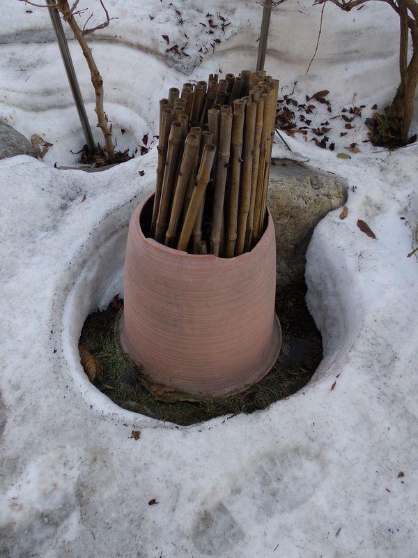 冬から春への庭_c0025115_21385816.jpg