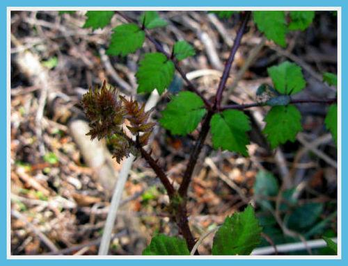 タラの芽とワラビ_e0072023_21434430.jpg