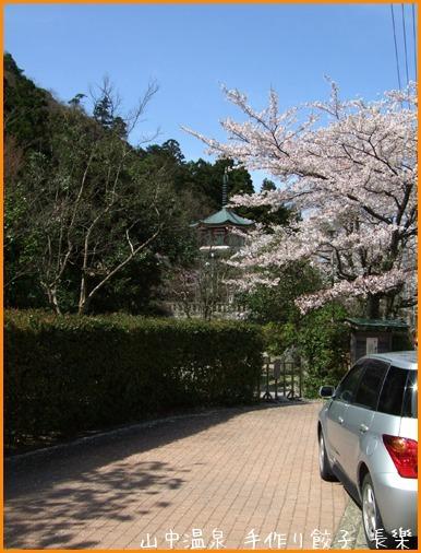 山中温泉今日の桜の巻その3_a0041925_23095418.jpg