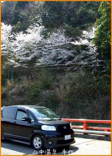 山中温泉今日の桜の巻その3_a0041925_23144913.jpg