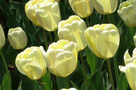 春爛漫_a0259130_2325425.jpg