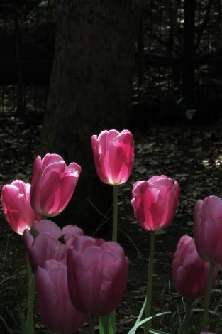 春爛漫_a0259130_2331169.jpg