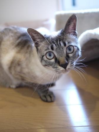 猫のお友だち カン太くんルノーちゃん編。_a0143140_22403081.jpg