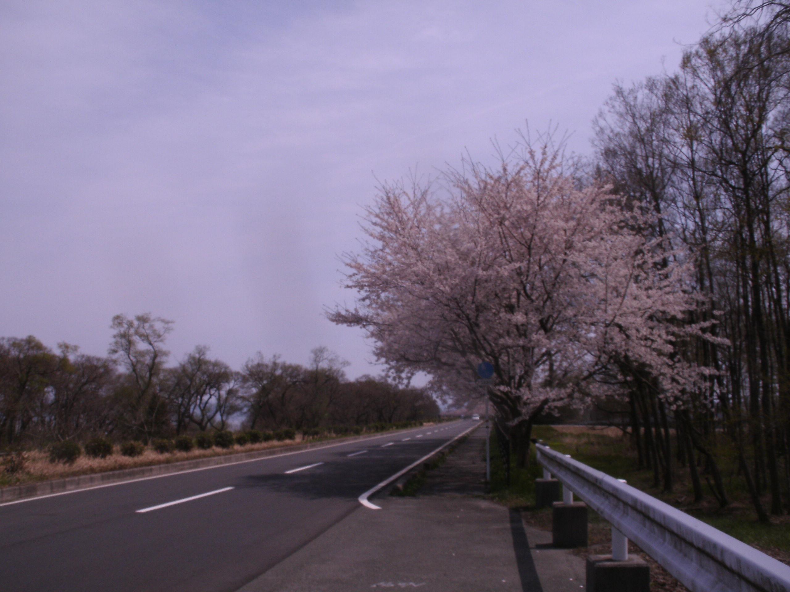 春の逃亡 琵琶①海津大崎編_c0206742_16474846.jpg