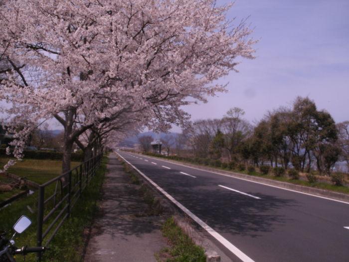 春の逃亡 琵琶①海津大崎編_c0206742_16475143.jpg