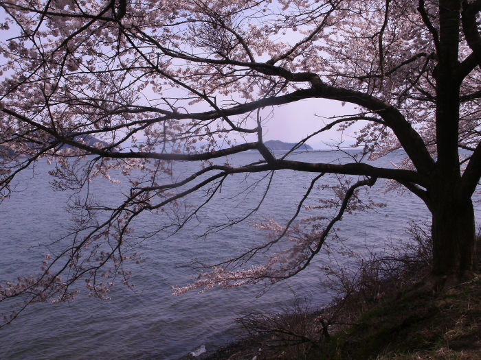 春の逃亡 琵琶①海津大崎編_c0206742_16480492.jpg
