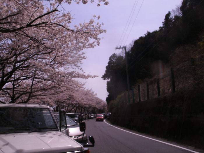 春の逃亡 琵琶①海津大崎編_c0206742_16480812.jpg
