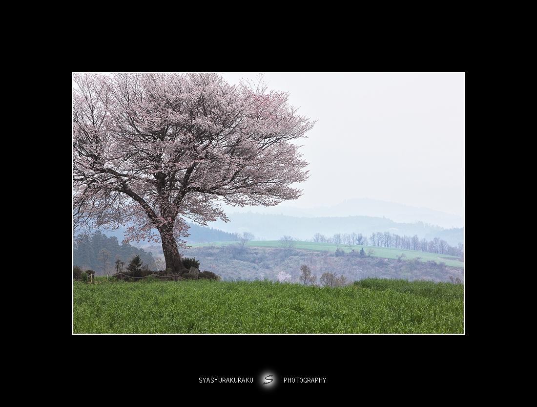 春のエピローグ_c0253556_22511093.jpg