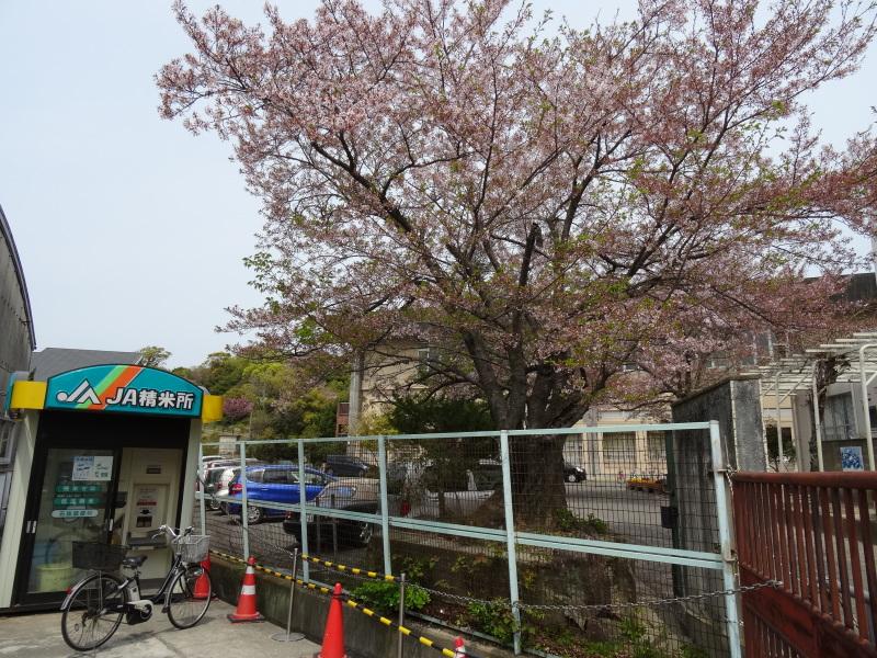 西林寺の手作り市 in 岬町淡輪     by     (TATE-misaki)_c0108460_21245441.jpg