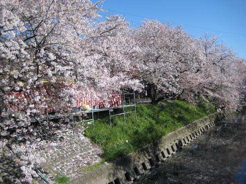 お花見日和~!!_f0230767_9302559.jpg