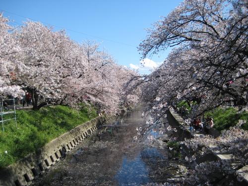 お花見日和~!!_f0230767_930522.jpg