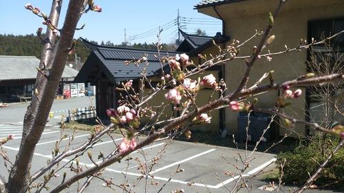 『春』真っ盛り!!_e0160569_16463842.jpg