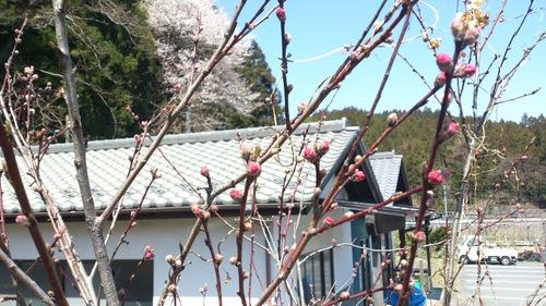 『春』真っ盛り!!_e0160569_16492255.jpg